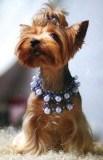 Украшения для собаки. Бисероплетение
